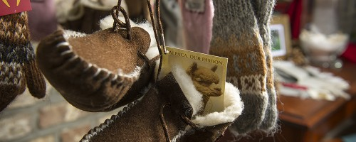 Alpaca-Mergelland-7895